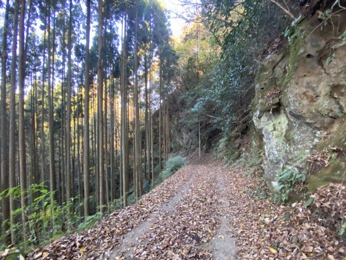 木々のなかの道