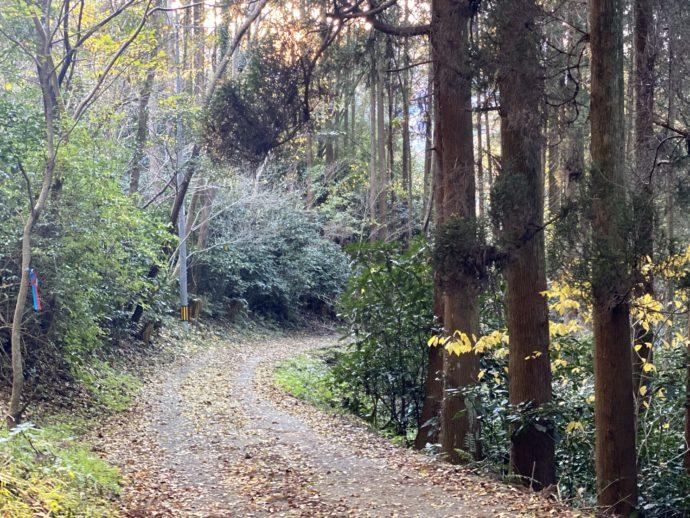 オルレの山林の道
