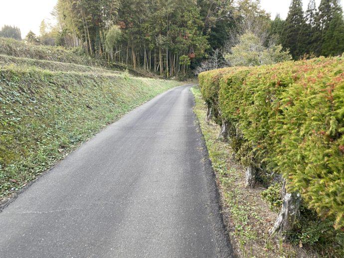 道路と緑の道
