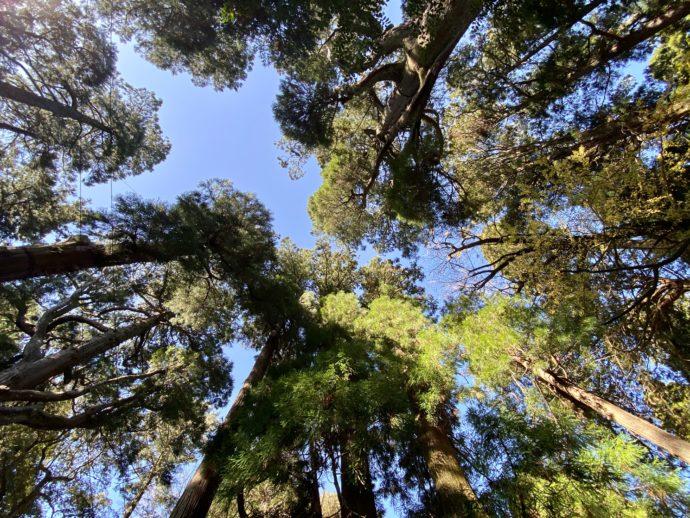 見上げた空と木立