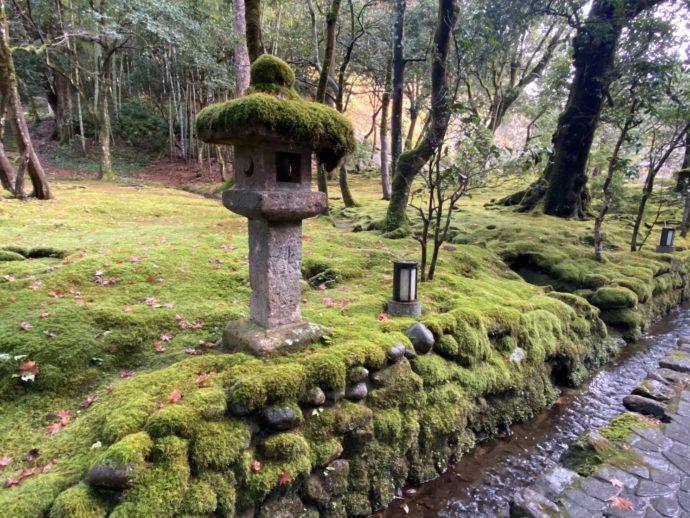 那谷寺の苔むす参道