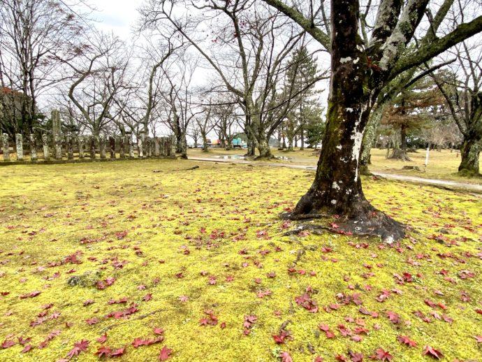 吉崎御坊跡の苔と紅葉