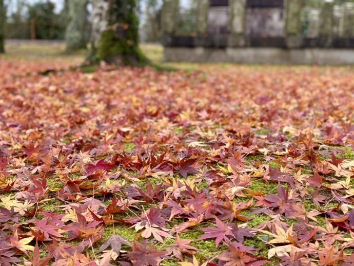吉崎御坊跡の紅葉