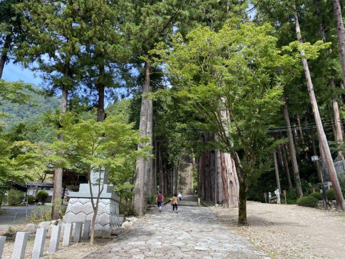 久遠寺の参道と古木