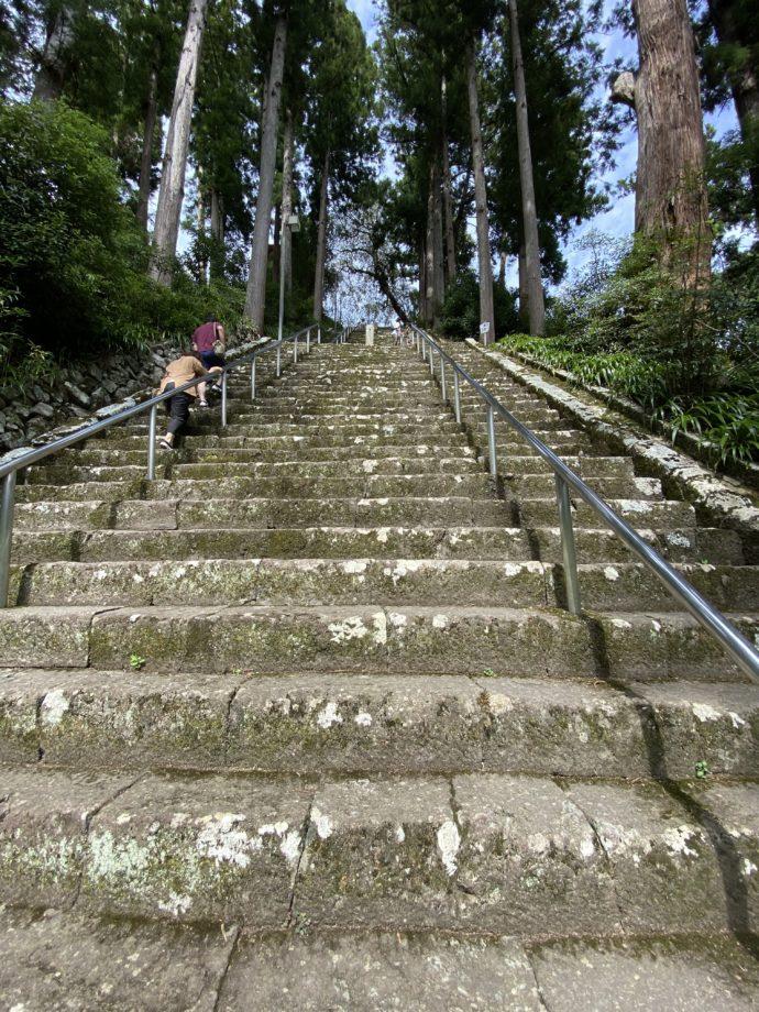 必死に菩提梯を登る人々