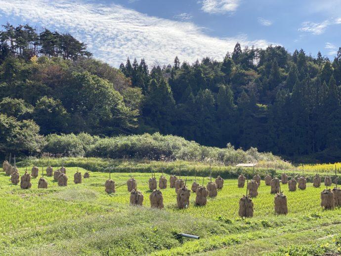 黒石寺へ向かう道の田んぼ
