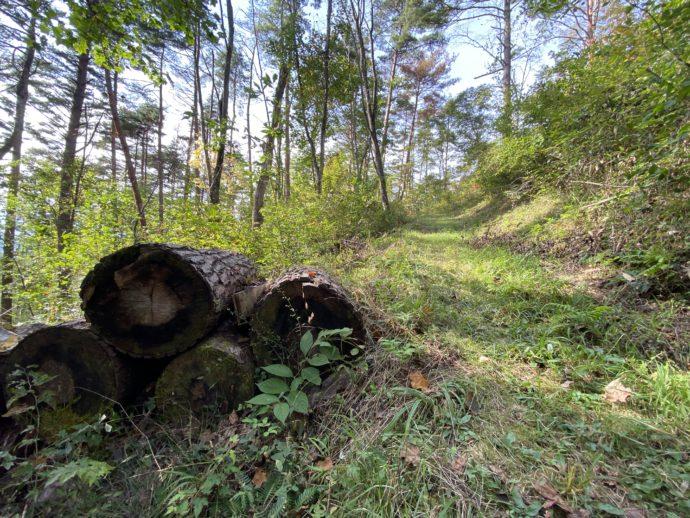 大師山のハイキングコースの丸太