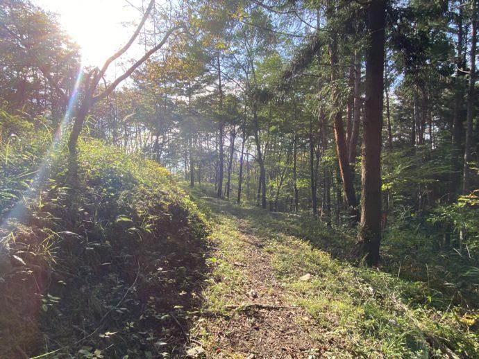 大師山のハイキングコース