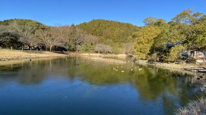 白水阿弥陀堂の池