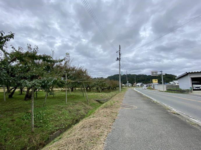 果樹園の横の道