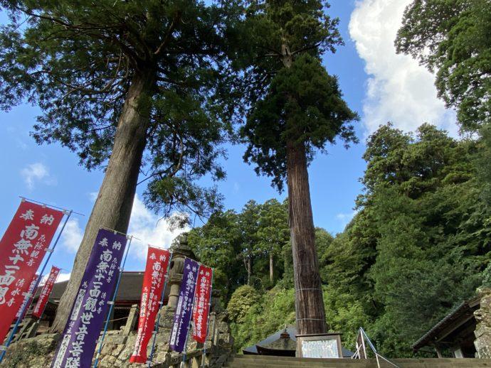 安来清水寺の境内の大木