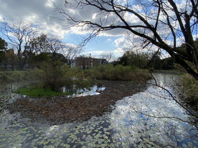 ドイツ村公園の池