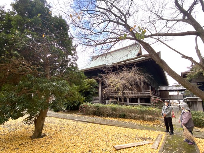 本妙寺大本堂とイチョウ
