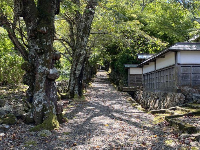 神宮寺への参道
