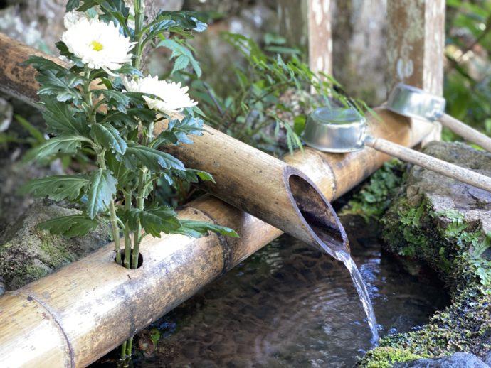 手水舎の水