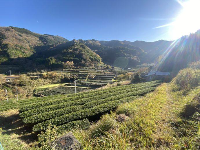 丸小野地区の茶園