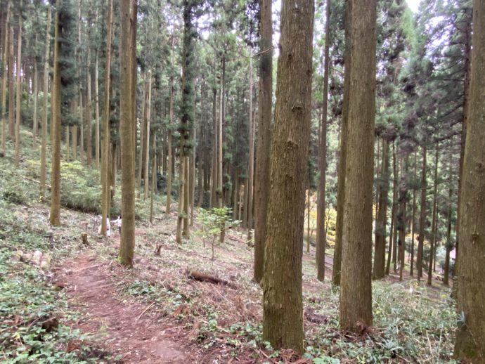 荒立神社の山林