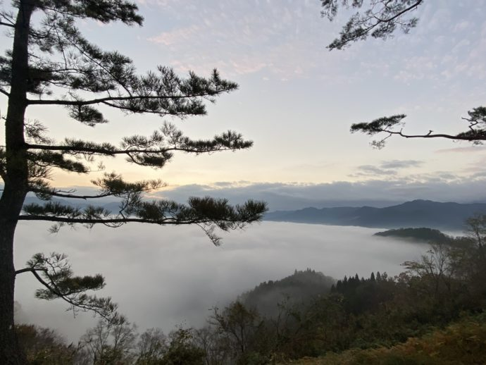 国見ヶ丘展望台の雲海と松
