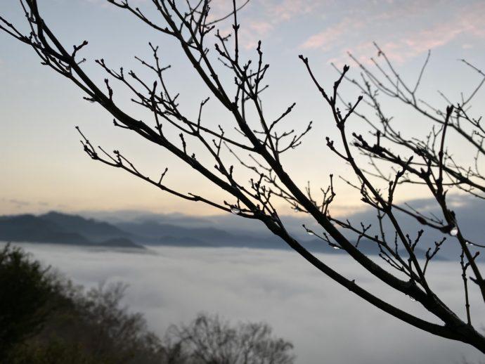 国見ヶ丘展望台の雲海と朝露に濡れる木の枝