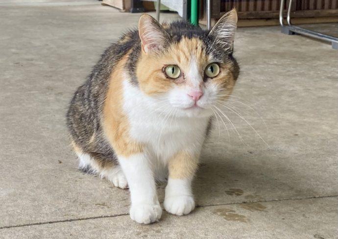 ひみ番屋街の猫
