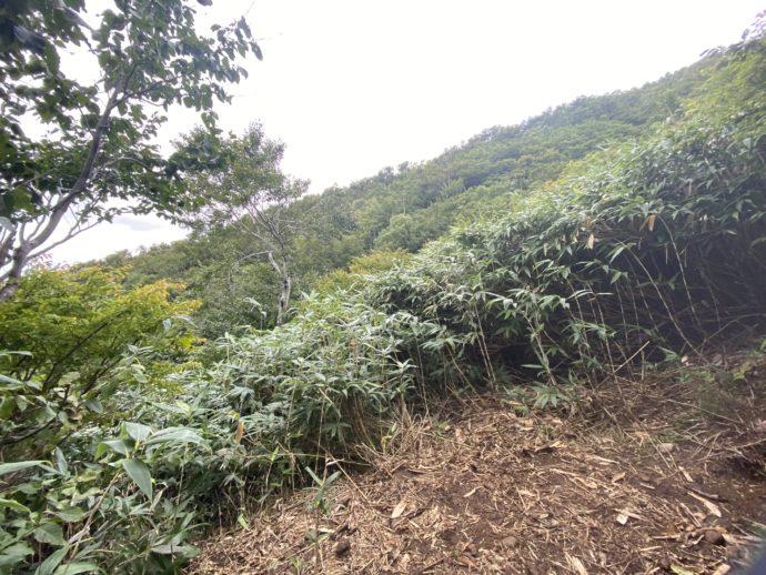 岩木山登山道の獣道