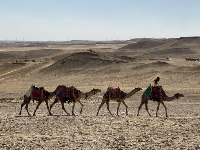 ピラミッドを歩く4匹のラクダ