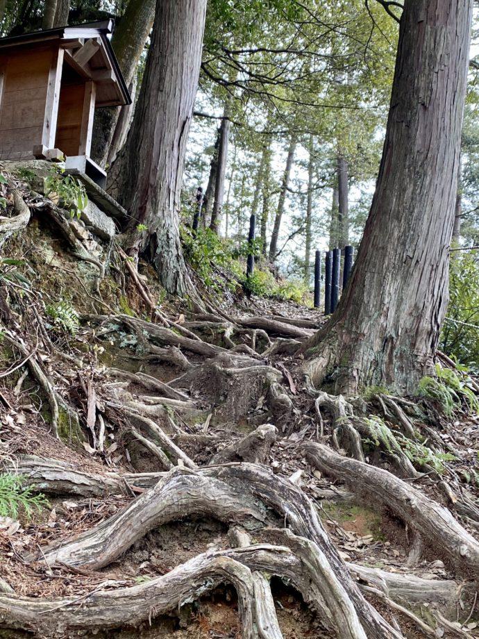 東海自然歩道の木の根