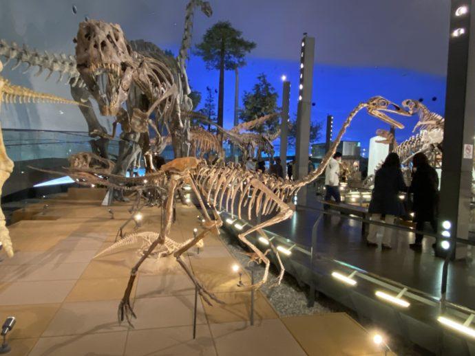 福井県立恐竜博物館の標本