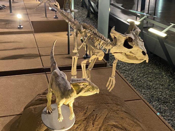恐竜の骨と模型