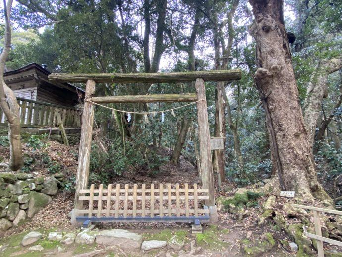 結界が張られた原生林