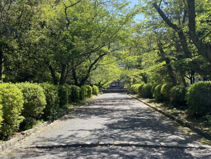 東光寺の大雄宝殿への道