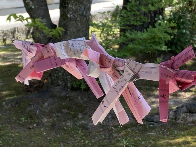 東光寺のピンク色のおみくじ
