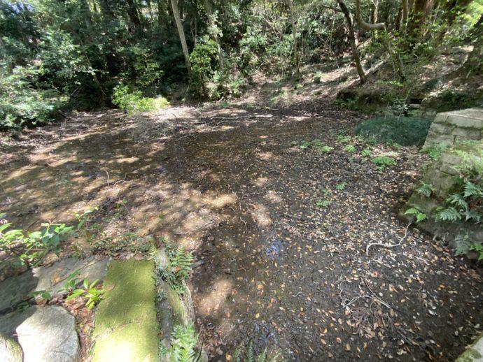 枯れている放生池