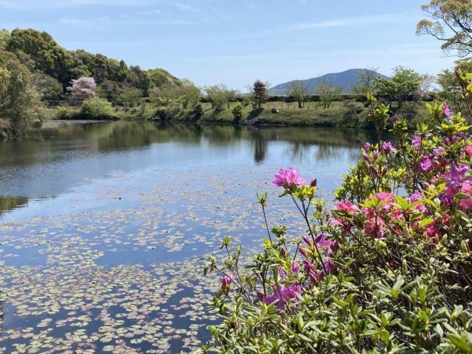 国指定名勝 毛利氏庭園の池