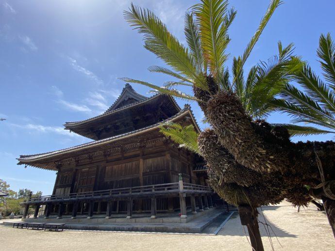 周防国分寺の本堂とソテツ