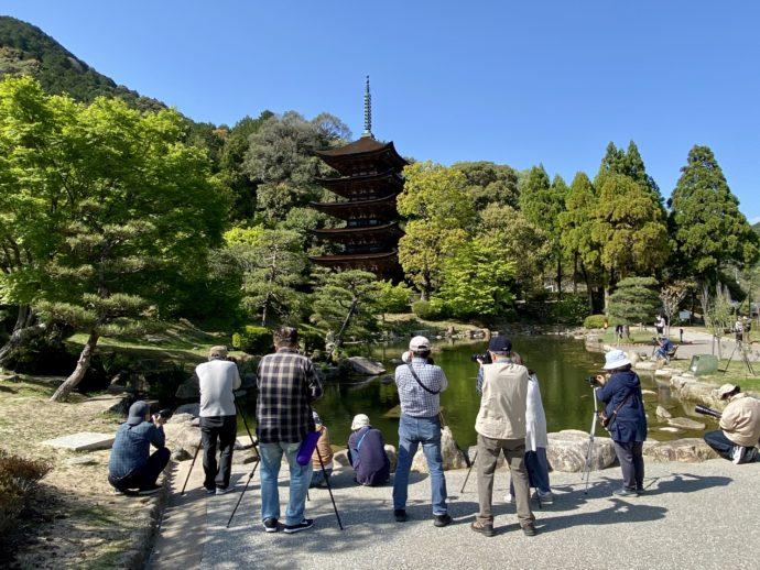 瑠璃光寺五重塔とカワセミ撮影隊