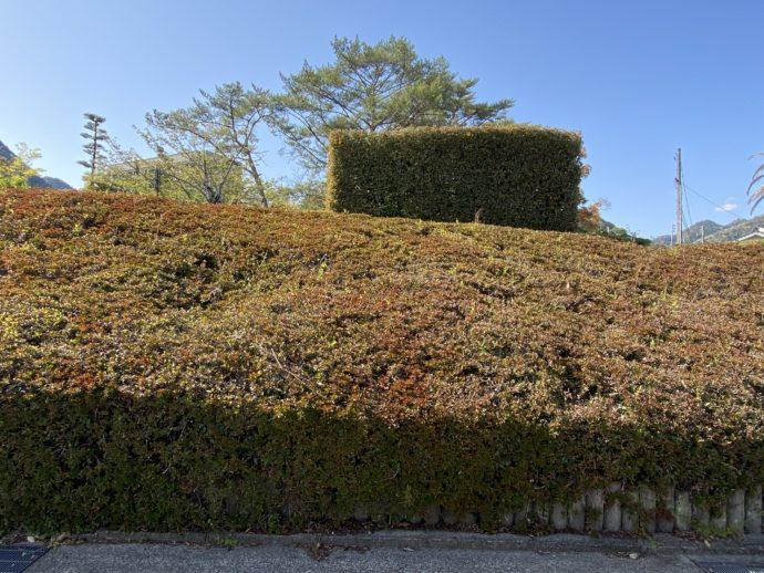 四角い植木