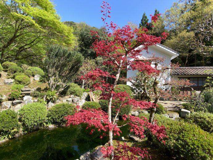 庭園の紅い木