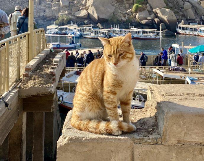 イシス神殿のボート乗り場の猫