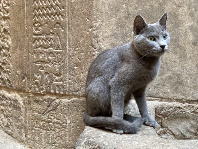 イシス神殿にいた猫