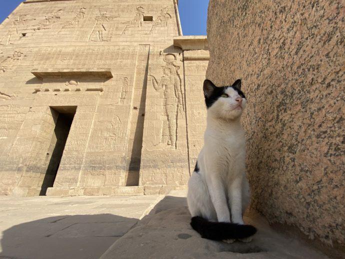 イシス神殿第一塔門と猫