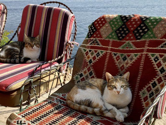 椅子でくつろぐ猫たち