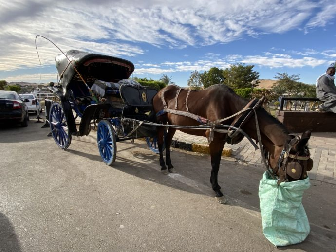 餌を食べる馬と馬車