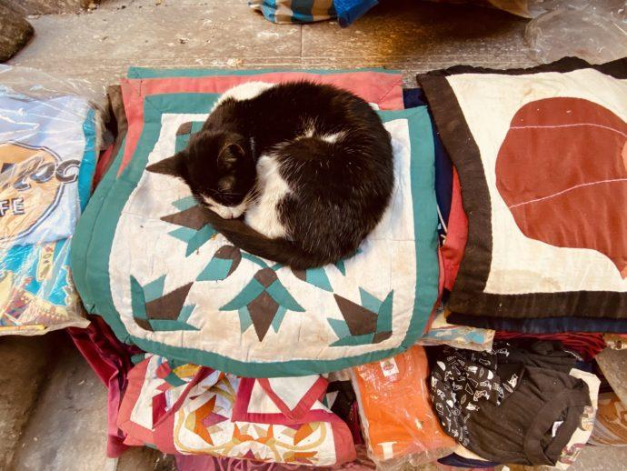 クッションの上で眠る猫