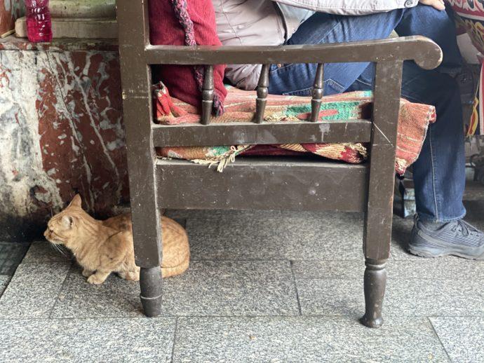 椅子の下でうずくまる猫