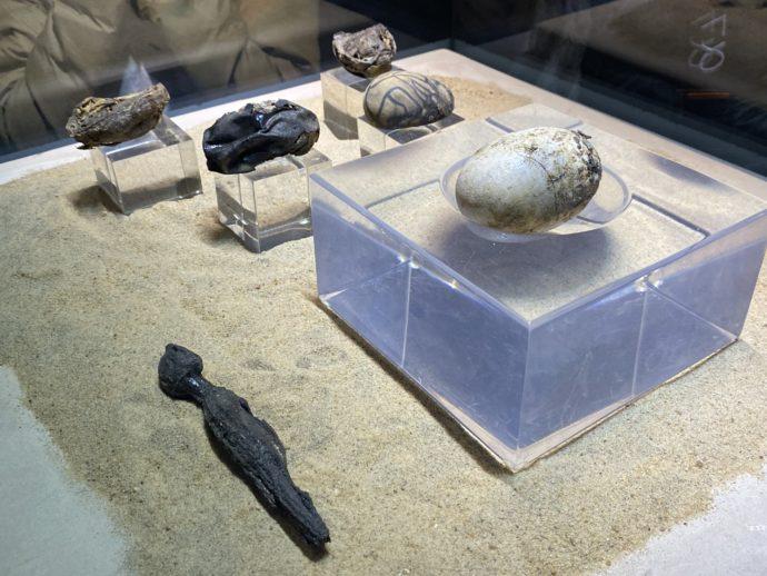 ワニの卵の化石