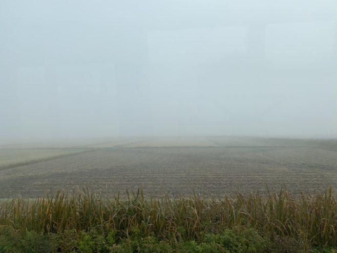 霧のかかる田んぼ