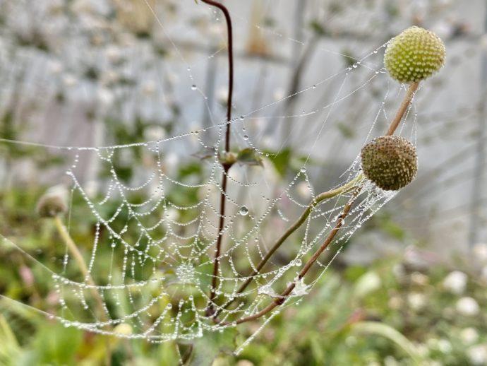 露のついた蜘蛛の糸