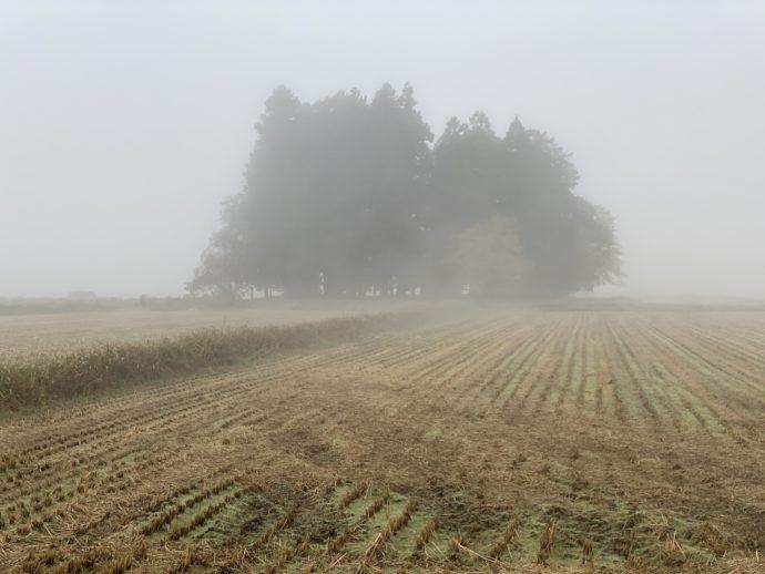 霧の中の林
