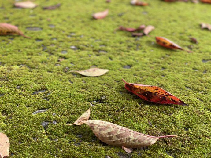 苔むした地面と落ち葉